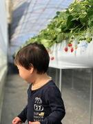 【まえブロ】前田侑基「いちごの季節」